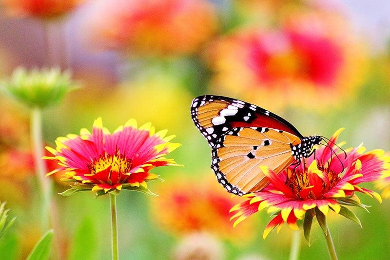 Trồng hoa, cây cảnh
